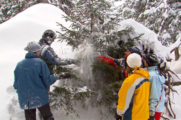 """""""Biskotat e Krishtlindjeve"""" në Zvicër, dhe tradita e re e familjeve në kërkim të pemës perfekte të Krishtlindjeve në Pyll!"""