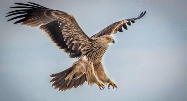 I gjithë Prilli Pushim - Sot 1 Prill Dita e Gënjeshtrave & Dita Botërore e Zogjve, por a e dini sa Ditë të tjera Ndërkombëtare ka gjatë Prillit?
