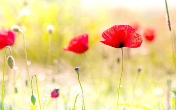 Lulet si Dhuratë - Simboli që ato Japin! Ja Kuptimi i disa prej Luleve më të Preferuara...