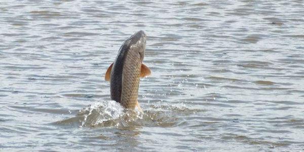 """Lumi Drino sa Vjen e """"Firaset"""" - Më Parë ka Patur Peshk me Bollëk e Llojshmëri thonë Peshkatarët!"""