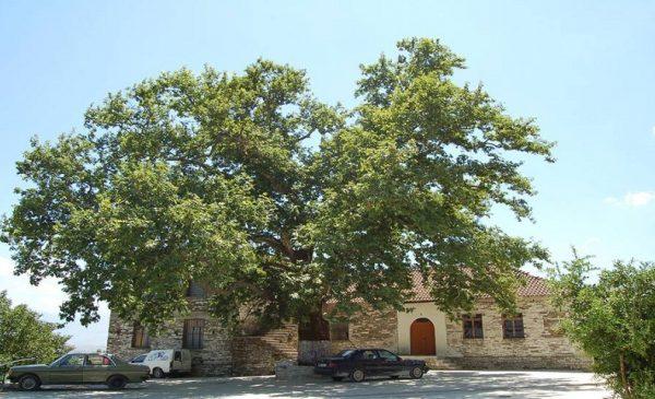 Historia e Veçantë e Ndërtimit të Rrugës me Asfalt të Fshatit Mashkullore të Gjirokastrës!