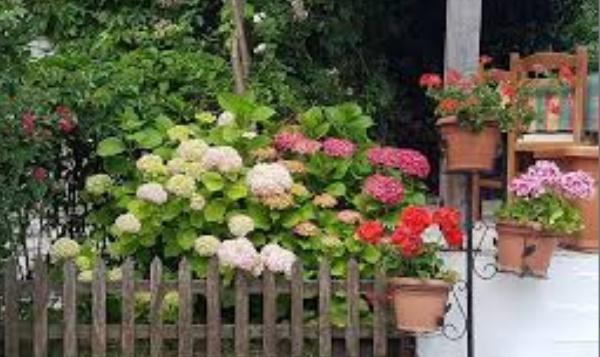 Gjirokastra me pamje piktoreske dhe me shumë lule!