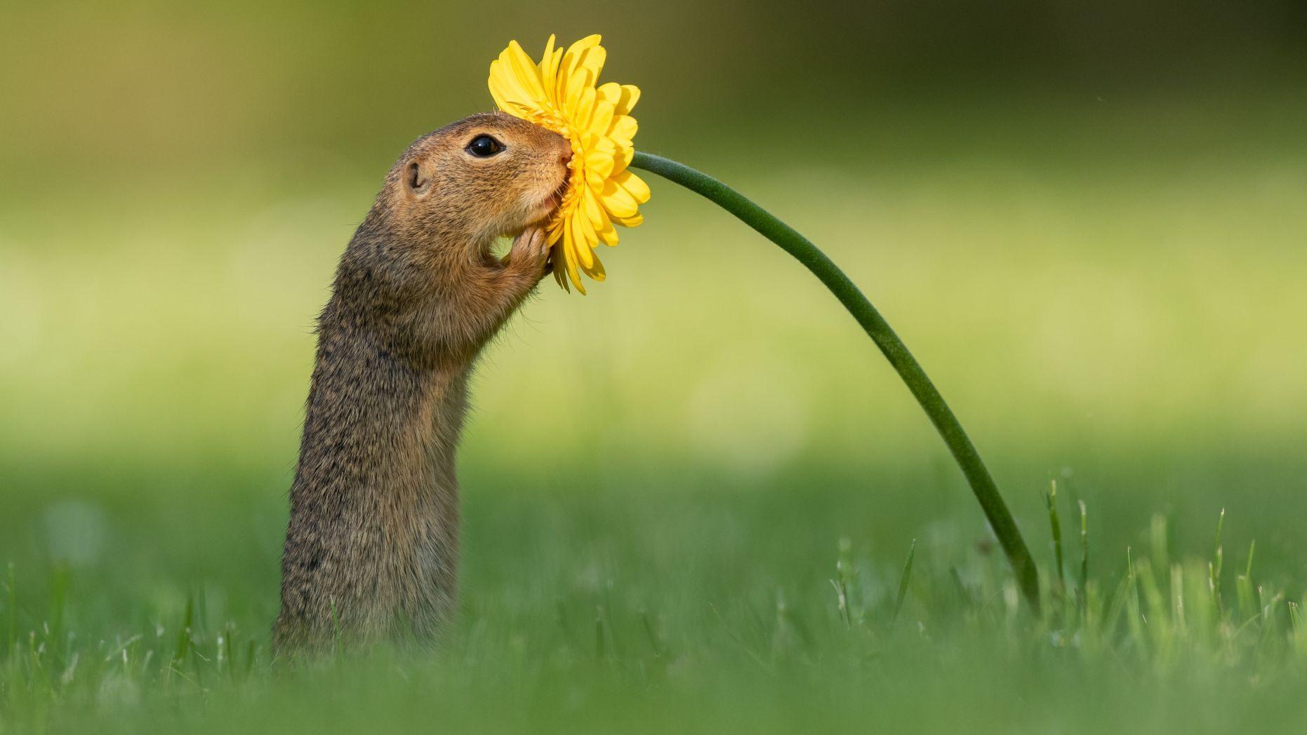 Magjia e një Fotografi - Si një Ketër ndaloi për t'i marrë erë një luleje!