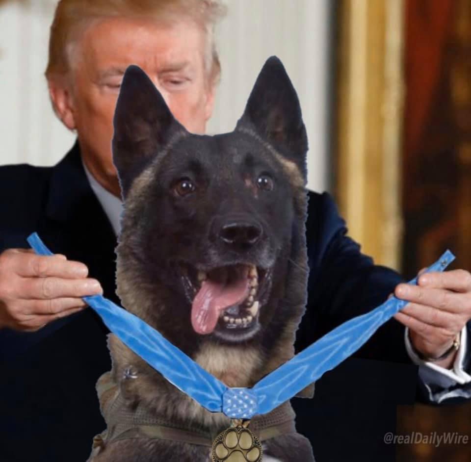 Hero i Amerikës - Presidenti Donald Trump dekoron me Krenari Qenin ushtarak që ndoqi deri në Eleminim Kreun e ISIS