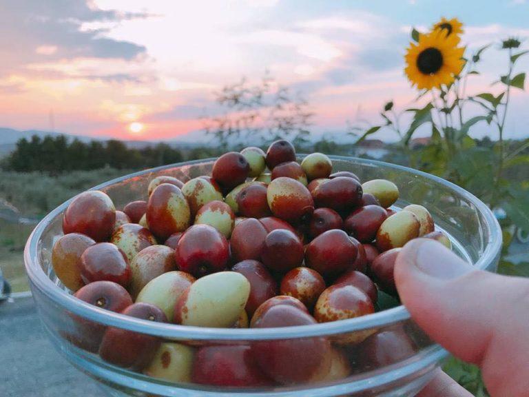 Xinxife, hide apo kimça? Si quhet nga anët tuaja ky Frut i Vjeshtës me këto Vlera të shumta shëndetësore!