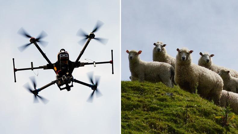 Tani me një Dron mund të Udhëhiqni edhe Gjithë Kopenë! Vjen Çobani Dixhital...
