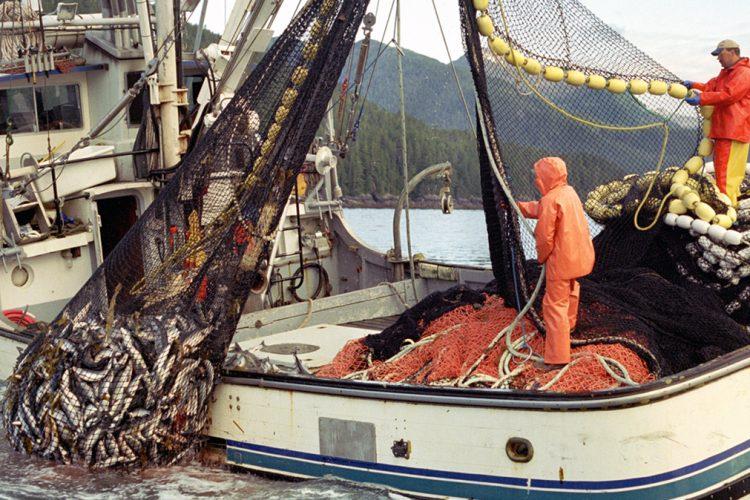 Nje lajm i mire per vendin tone,  rritet eksporti i prodhimeve te detit