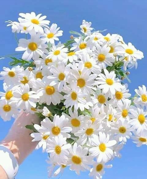 Lule apo bime, veshtire te vendosesh se cfare jane?!