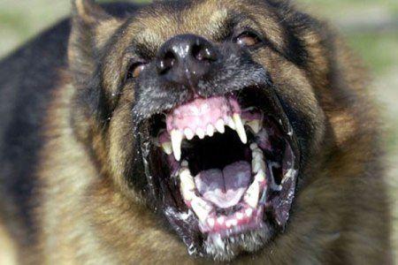 """Qentë e shtëpisë,""""larotë e pazarit"""" dhe """"qeni i policise""""!"""