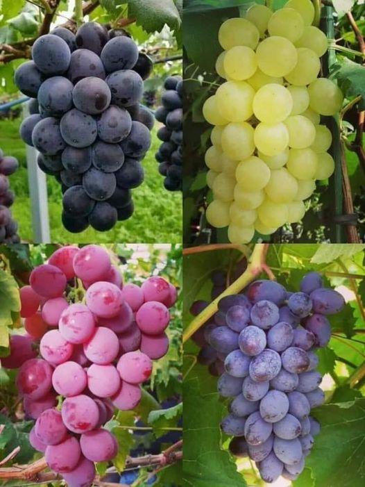 Frutin në foto ne në Gjirokastër e quajmë edhe ...Po ju si i thoni ndryshe?!