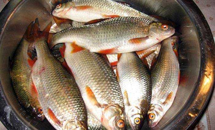 Tavë me peshk lumi, cili nga peshkatarët e përgatit më të mirë?