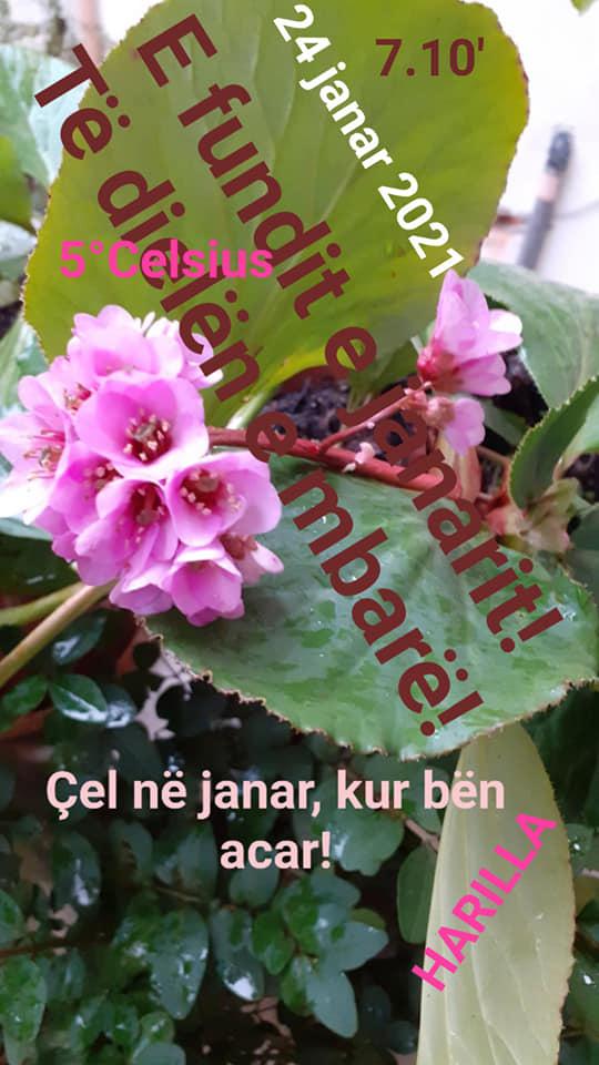 Gjirokastër, sot mot me shira të dendura, gjeni dhe emrin e lules qe çel ne janar kur ben acar!