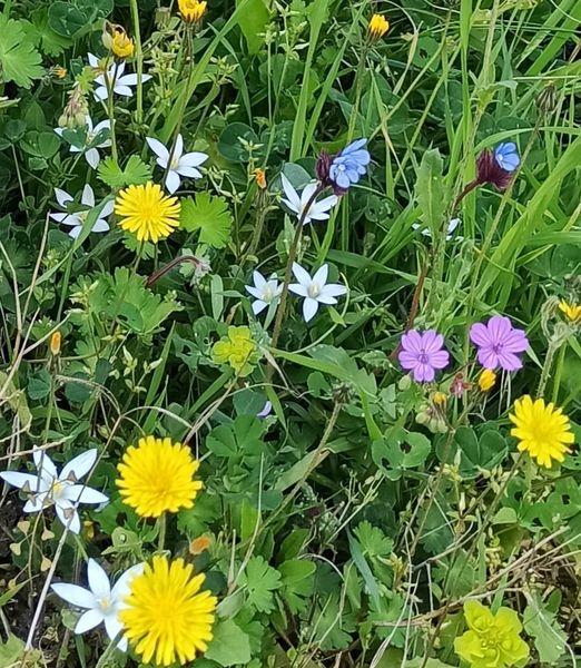 Kur lulet ripërtërihen çdo vit pranë njëra tjetrës, në ngrohtësinë e diellit, ujit dhe tokes...- Nga Vjollca Koko