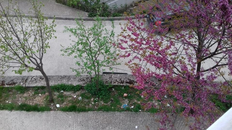 Gjirokastra ne pranvere, mot i vranët por i ngrohtë...