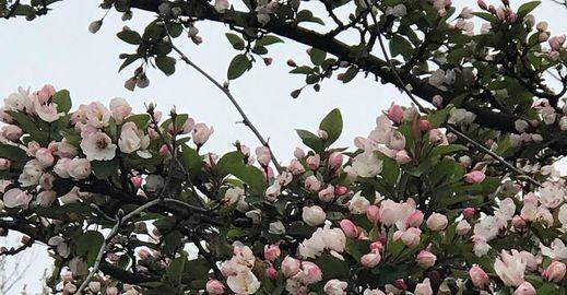 Pranvere e mbare po me nje lule nuk vjen behari...