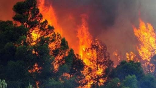 Bie zjarr i madh ne nje fshat te Gjirokastres, policia jep detaje te ngjarjes