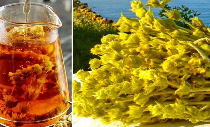 Hë mo gjejeni, në cilin mal është mbledhur kjo tufë dyll e verdhë me çaj?