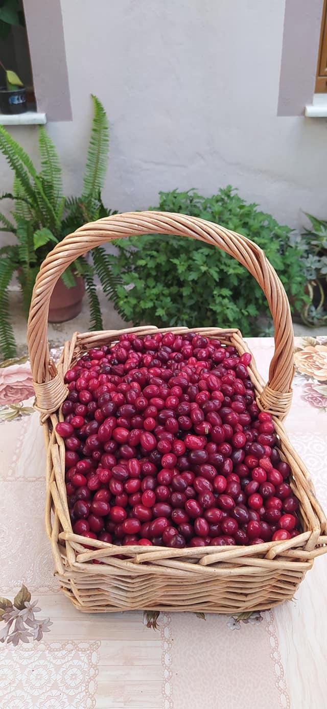 Ju ka marre malli per frutat e Erindit? ( Foto )